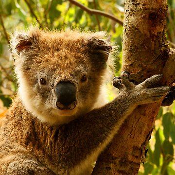 Koala by MelvaVivian
