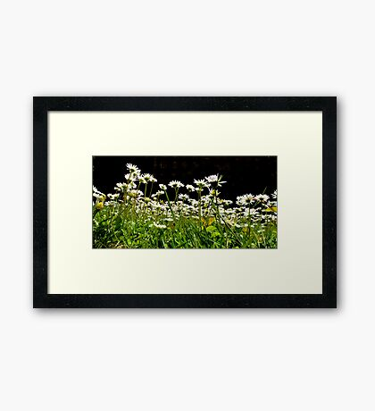 Down with the Daisies Framed Print
