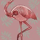 Flamingo by dcrownfield