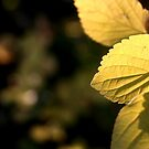 Autumn Bokeh by MikeO