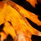 Foliage1 by MikeO