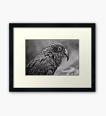 Monochrome Kea Framed Print