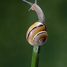 Just A Snail by Miles Herbert