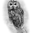 Tawny Owl by Miles Herbert