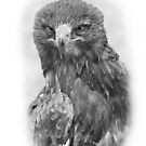 Tawny Eagle by Miles Herbert