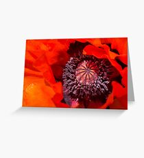 Oriental poppy closeup, Papaver orientale Greeting Card