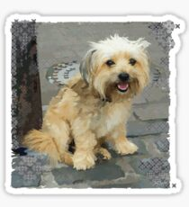 Louie the Shorkie-Tzu : Shih Tzu Yorkshire Terrier (Yorkie) Mix Sticker