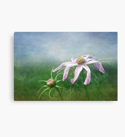 Meadow Sweet Canvas Print