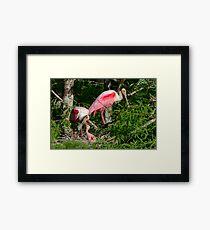 Roseate Spoonbill Family Framed Print