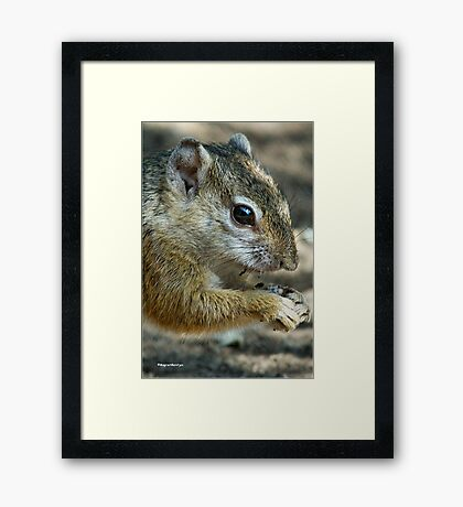 UP CLOSE - THE TREE SQUIRREL – Paraxerus cepapi  Framed Print