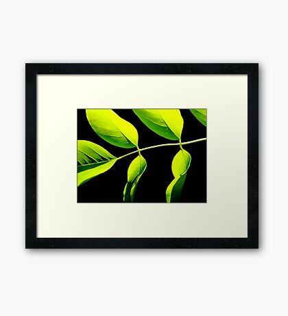 Lime Green on Black Framed Print