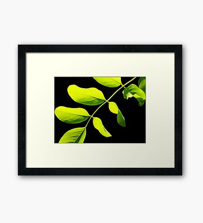 Lime Leaves on Black Framed Print