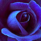 Eisige Rose von Julie Thomas