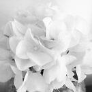 Wedding Flower by kazhy
