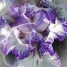 Iris Fragrance by JonnisArt