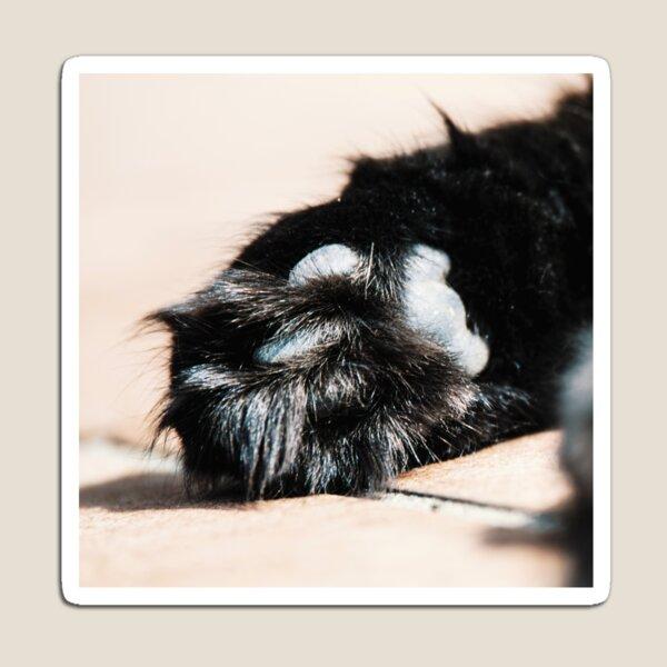 Cat Paw Pads XI Magnet