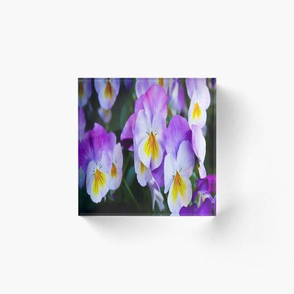 pansy flowers Acrylic Block