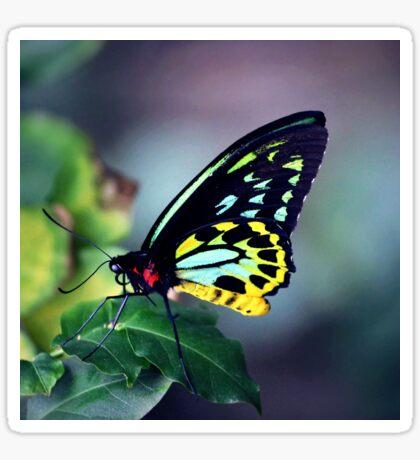 Fluorescent Birdwing Sticker