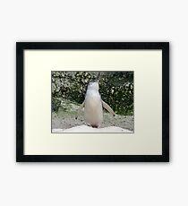 Fairy Penguin Framed Print