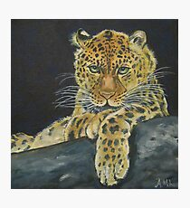A Leopard's Consideration Photographic Print