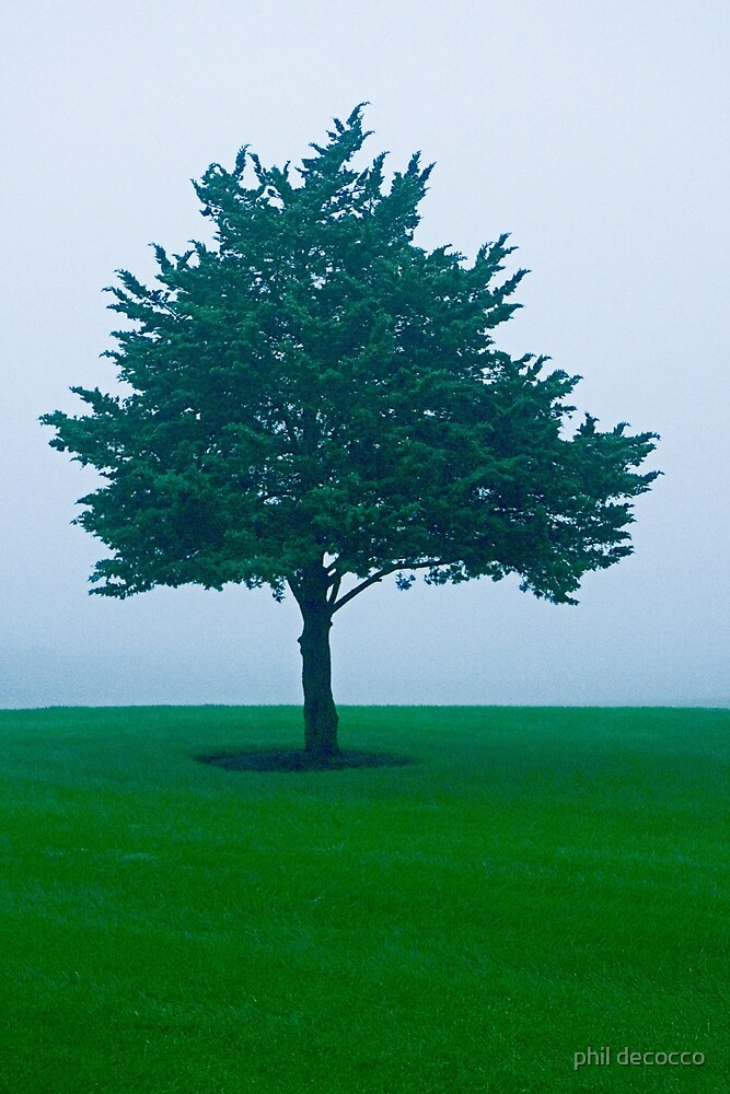 Foggy Day Pine by phil decocco