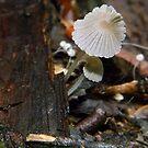Fungi 2 by DEB CAMERON