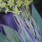 Agave Flower by Liz Worth