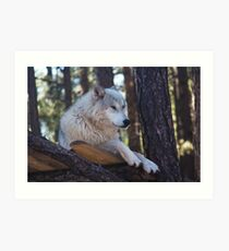 Timber Wolf Sentinel Art Print