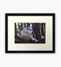 Timber Wolf Sentinel Framed Print