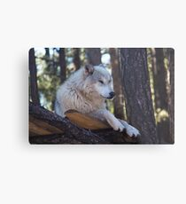 Timber Wolf Sentinel Metal Print