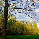 Springtime ! by Elfriede Fulda