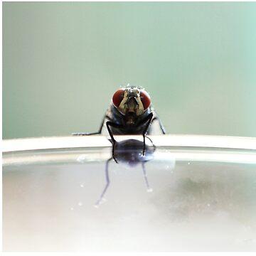 Bugs eye view by natfish