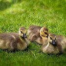 Goosebabies by greyrose