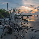 Tree Stump - St. George Island by thatche2