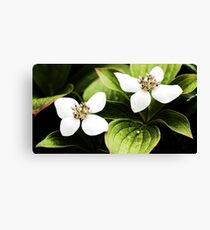 Bunchberry - Two Blossoms Canvas Print