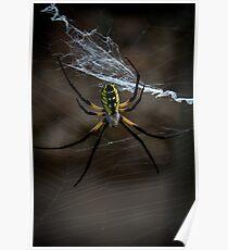 Yellow Garden Spider Poster