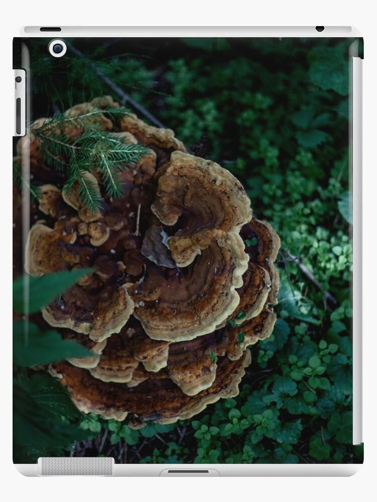 Large Mushroom by MsDunwich