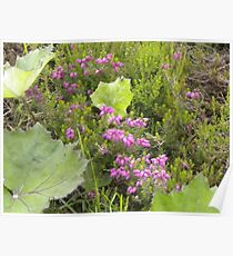 Small Patch of Heather Poster