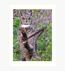 Bubo africana - Spotted Eagle Owl Art Print