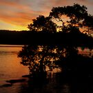 Mangrove Sunset by Martice