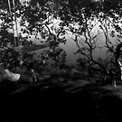 Mangrove Fun by Martice