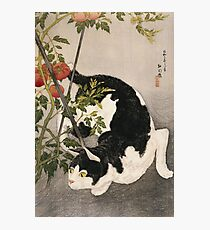 Takahashi Hiroaki - Cat Prowling Around A Staked Tomato Plant. Cat portrait: cute cat, kitten, kitty, cats, pets, wild life, animal, smile, little, kids, baby Photographic Print