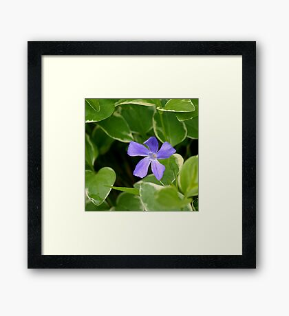 Periwinkle Pillow Framed Print