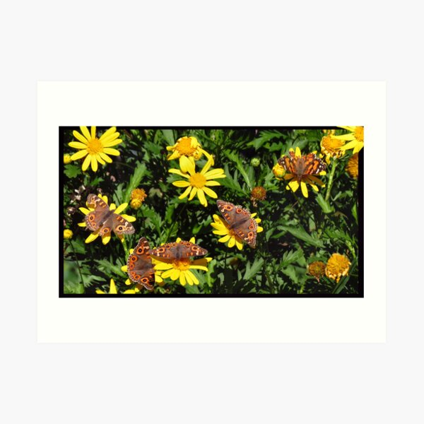A kaleidoscope of Butterflies Art Print