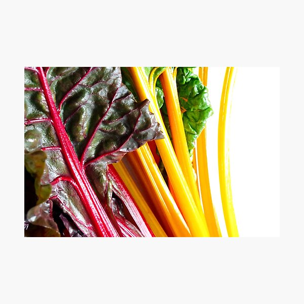 Yellow And Red Chard - Healthy And Colorful Veggies Photographic Print