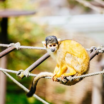Squirrel Monkey by PatiDesigns