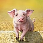 Cute Pink Pig, Original Illustration by Cara Bevan by CaraBevan