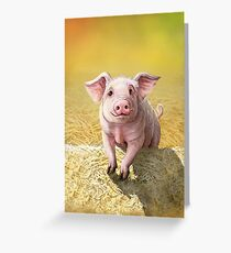 Cute Pink Pig, Original Illustration by Cara Bevan Greeting Card