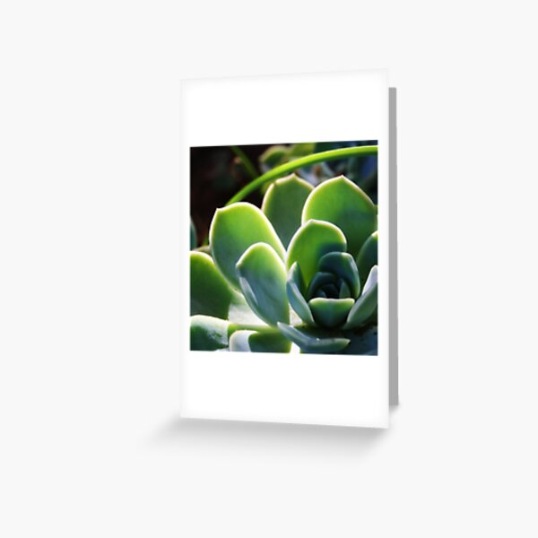 Succulent in sunlight Greeting Card