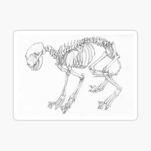 Cat Skeleton Sticker